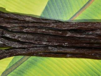Mauritius vanilla tahitensis