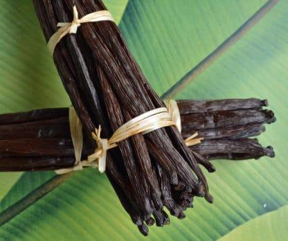 Grandes gousses de vanille de Nouvelle-Calédonie