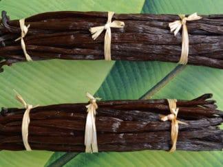 Bottillns de vanille de Nouvelle-Calédonie
